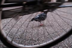 池袋駅前 Photography Now 03