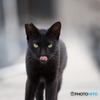 真鍋島の猫たち5
