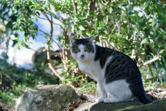 函南町 寺猫巡り