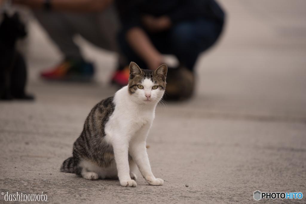 真鍋島の猫たち3