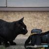 真鍋島の猫たち7