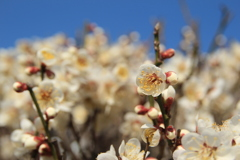 春の便り(^^)/