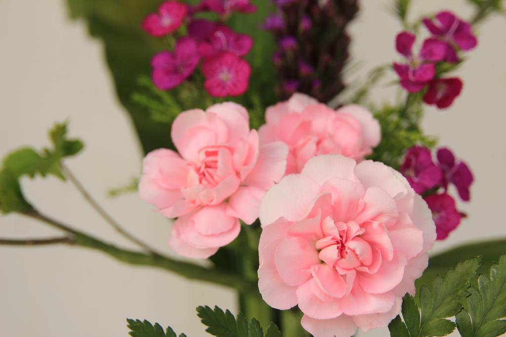 ピンクのお花(^^♪
