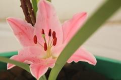 春の花(^^)/