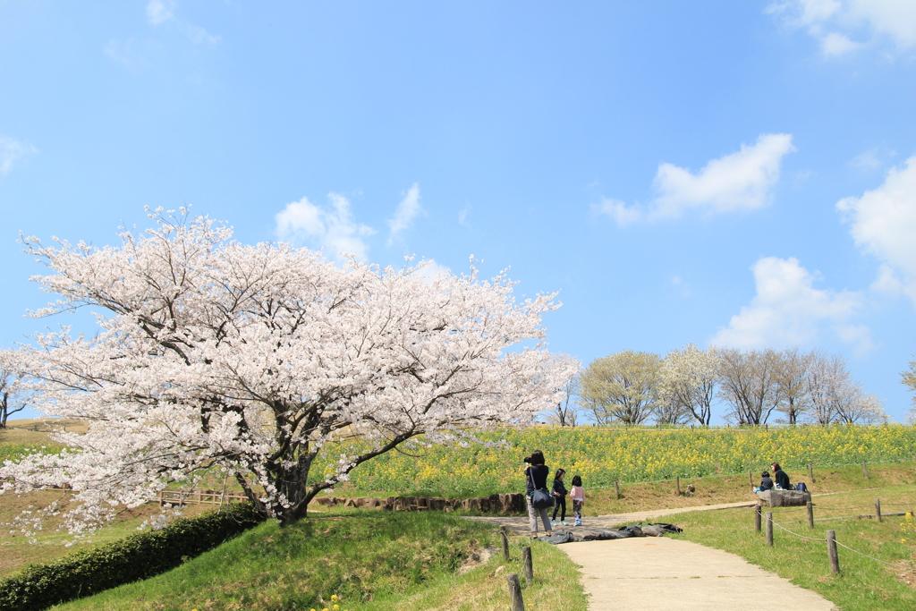 春の高原(^^♪