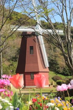 春のオランダ風車(^^)/