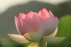 蜂さんも遊びに来たよ(^^)/