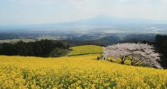 白木峰高原に春が来た(^^)/