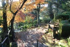 諫早公園の紅葉
