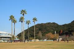 ヤシの木がある公園