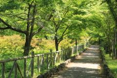 初夏の散歩道(^^)/
