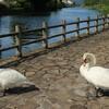 白鳥さん、こんにちは(^^)/