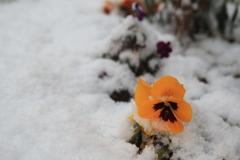 雪の花(^^)/