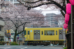 今年も桜の似合う踏切へ(補機ver.)