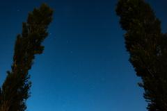木間から夏の星座