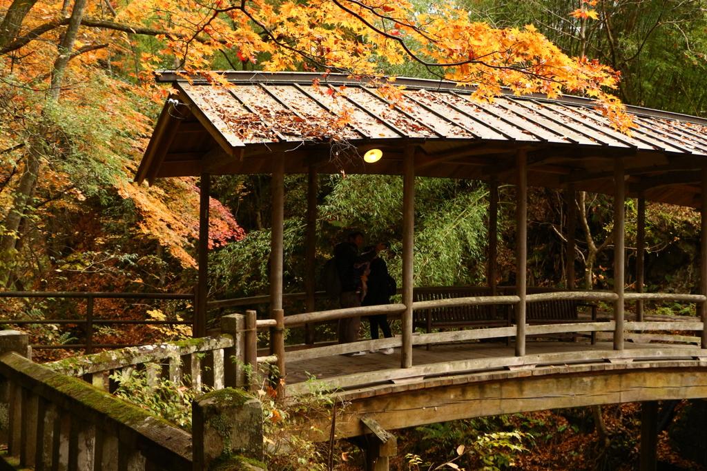 屋根付き橋の紅葉