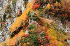 岩場の紅葉