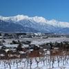 ワイン用ブドウ畑から北アルプス