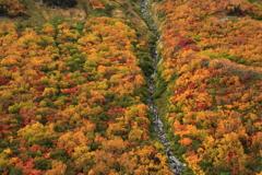 大観峰の紅葉