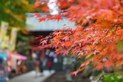 東口本宮冨士浅間神社の紅葉祭_DSC06987