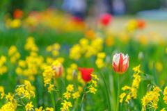 春爛漫(DSC08474)