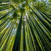 報国寺 竹の庭②