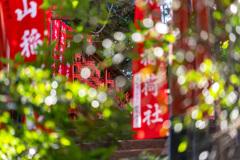 鶴岡八幡宮内 丸山稲荷社_DSC07420