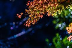 北鎌倉 円覚寺の紅葉_DSC07388