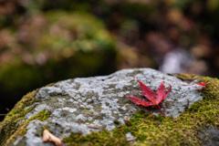 東口本宮冨士浅間神社の紅葉祭_DSC07015