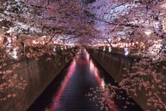 桜色に染めて