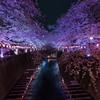 夜桜Light