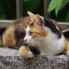近くにいた猫②
