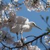 桜の木で一休み