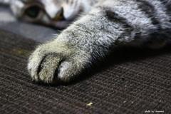 猫の手~っ!!