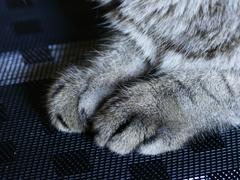 猫photo 011