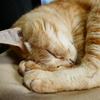 猫photo 012