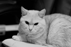 猫photo 003