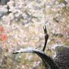 鶴の池 春