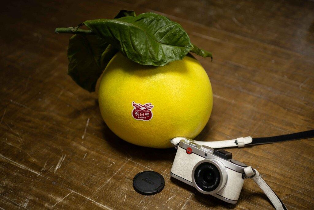 晩白柚 比較画