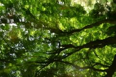 新緑の油絵 1