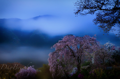 春霞たなびく山の桜花