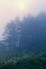 霧に抱かれて