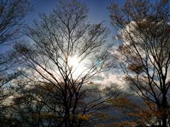 陽を待ちわびる季節