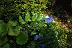 極楽浄土に咲く華 その一