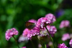 花と蝶MXLI!