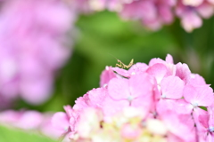虫・昆虫と花CXIII!