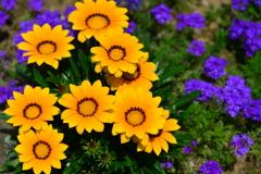 季節の花CDLIV!