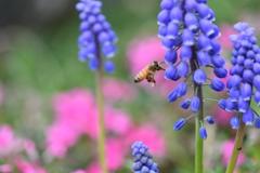 虫・昆虫と花CLXXVI!