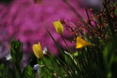 季節の花DCLXXI!