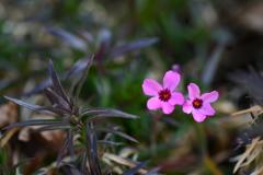 季節の花CCLXVII!